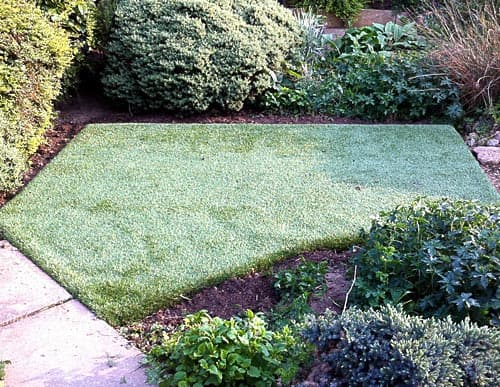 Small turfing area